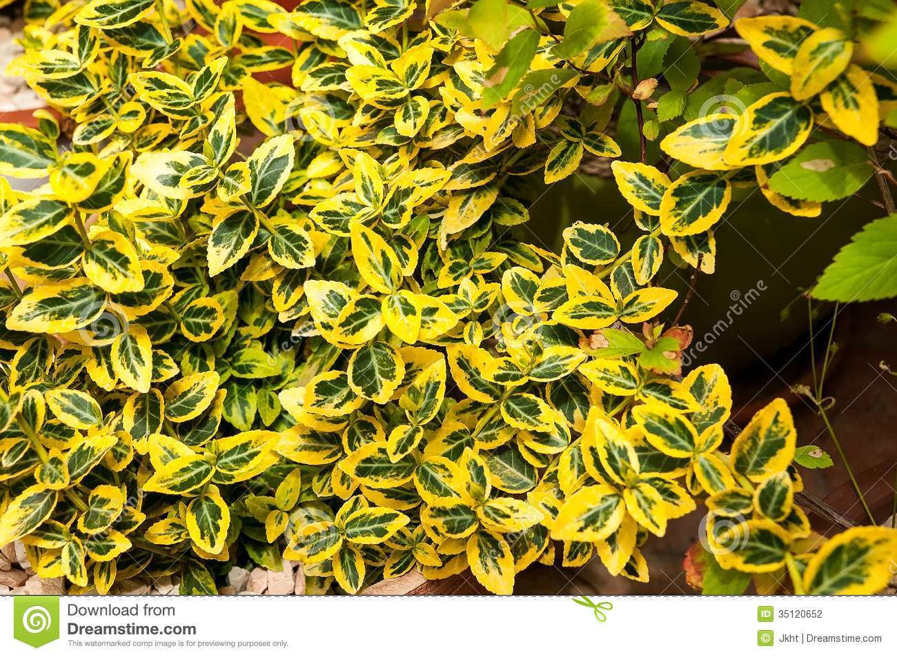 Green And Yellow Plant Stock Photography - Image: 35120652
