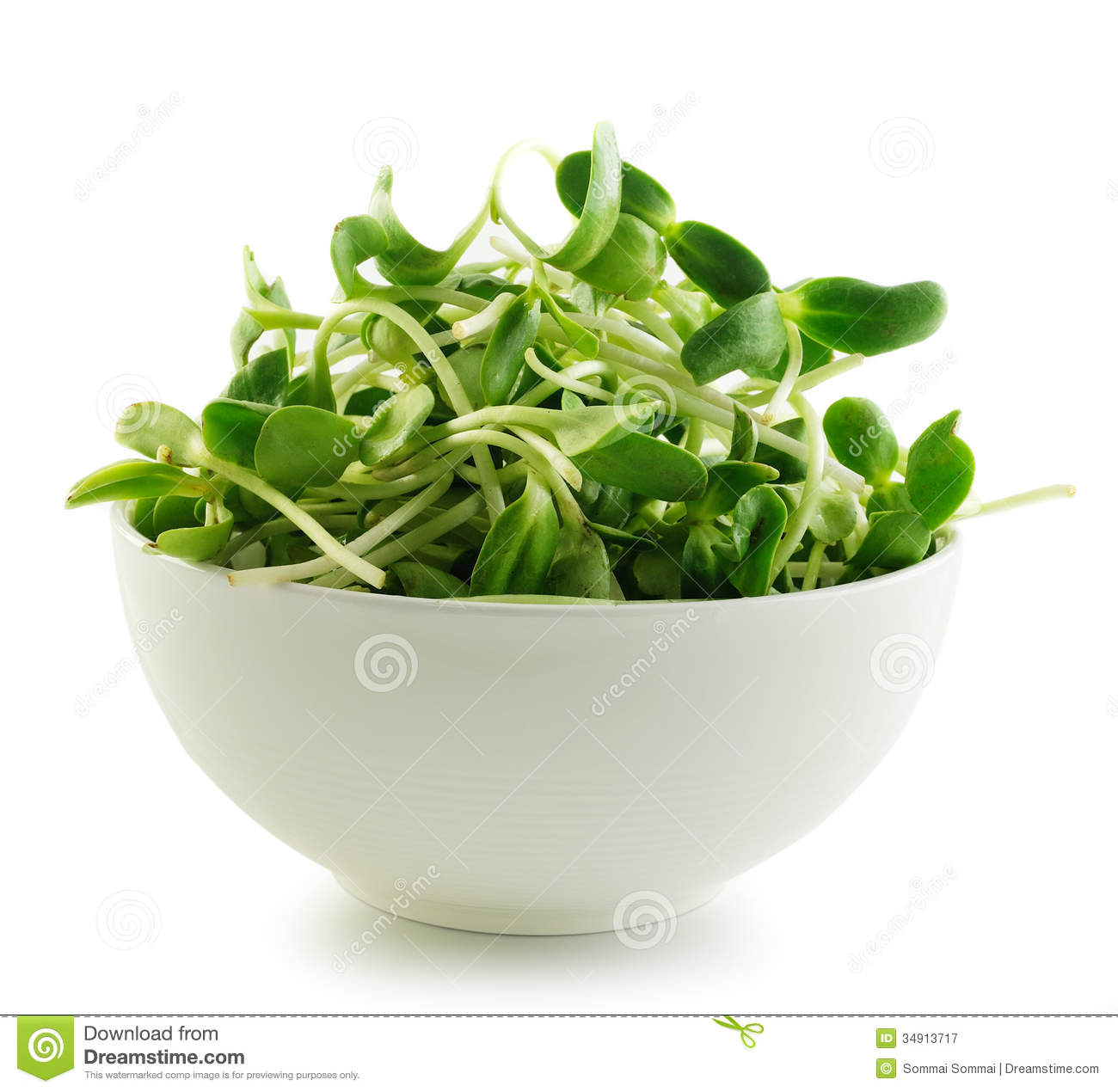 Green Young Sunflower Sprouts Isolated On White Background Stock ...