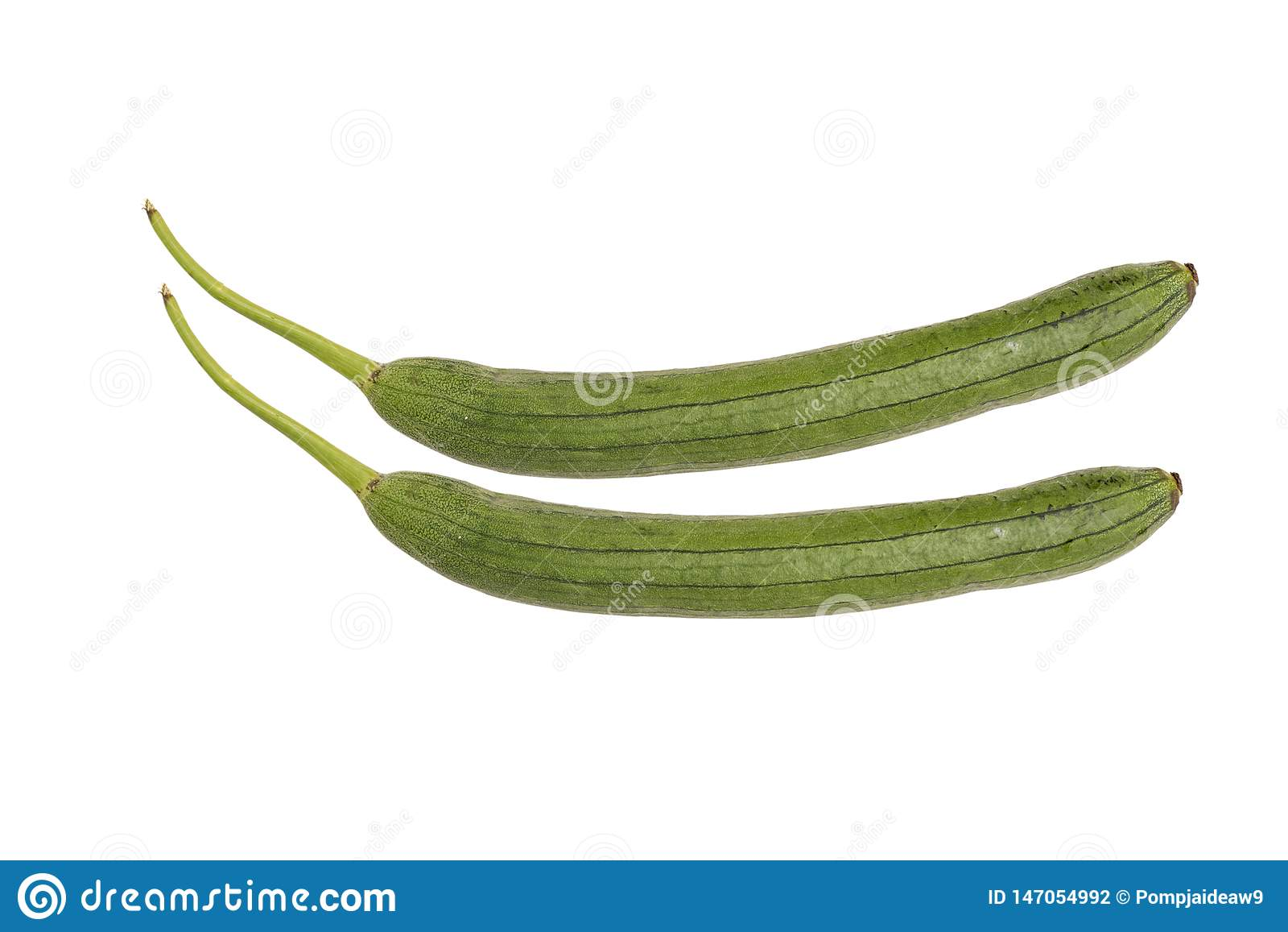 Green Zucchini isolated on white background. Japanese zucchini. Variety of marrow or summer squash, picked when small. Long and
