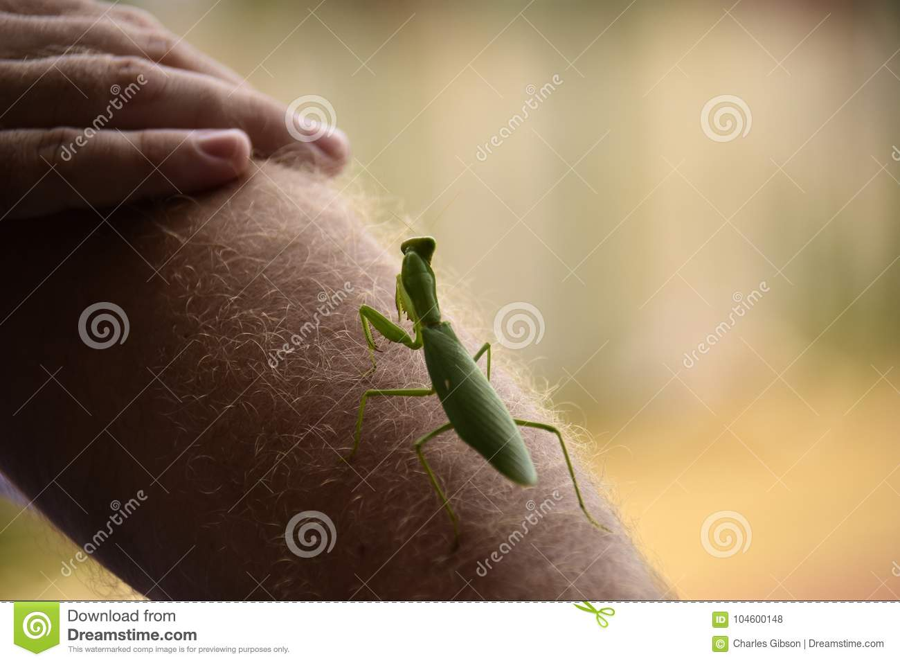 praying mantis bite head