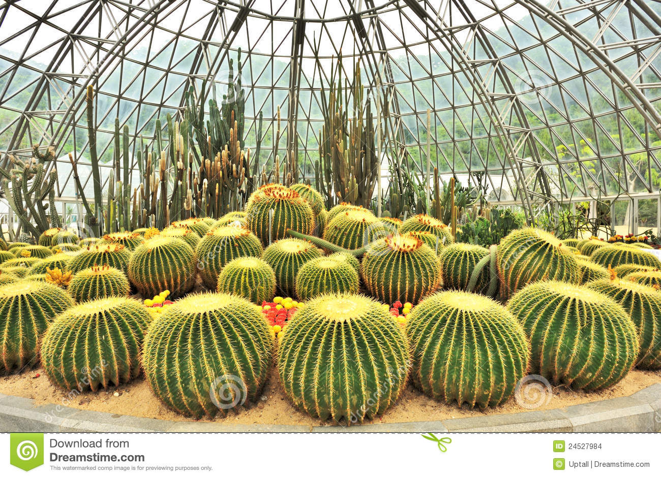 Greenhouse Of Desert Plants Stock Images Image 24527984