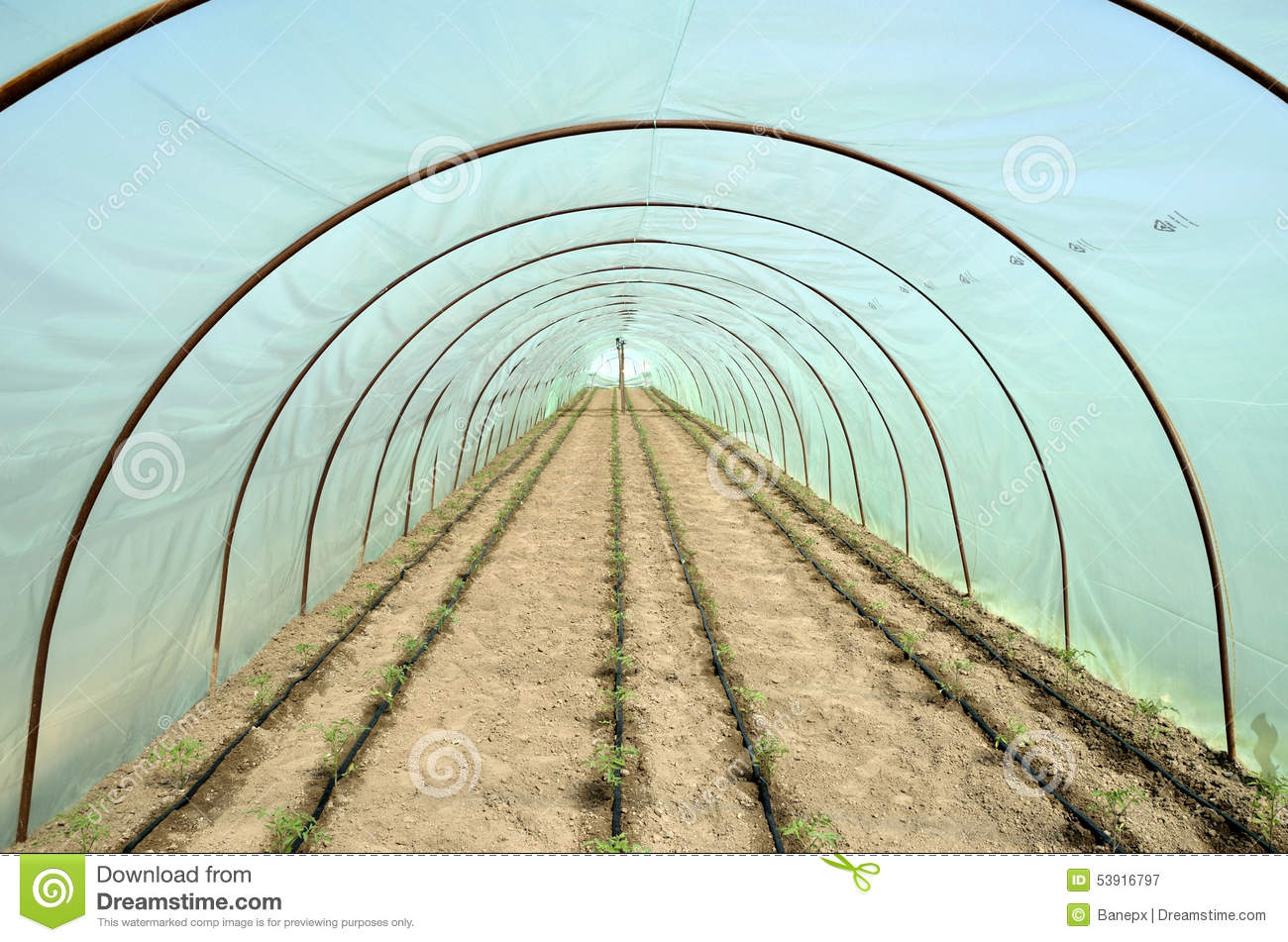 Greenhouse And Garden Beds Of Tomato Stock Photo Image