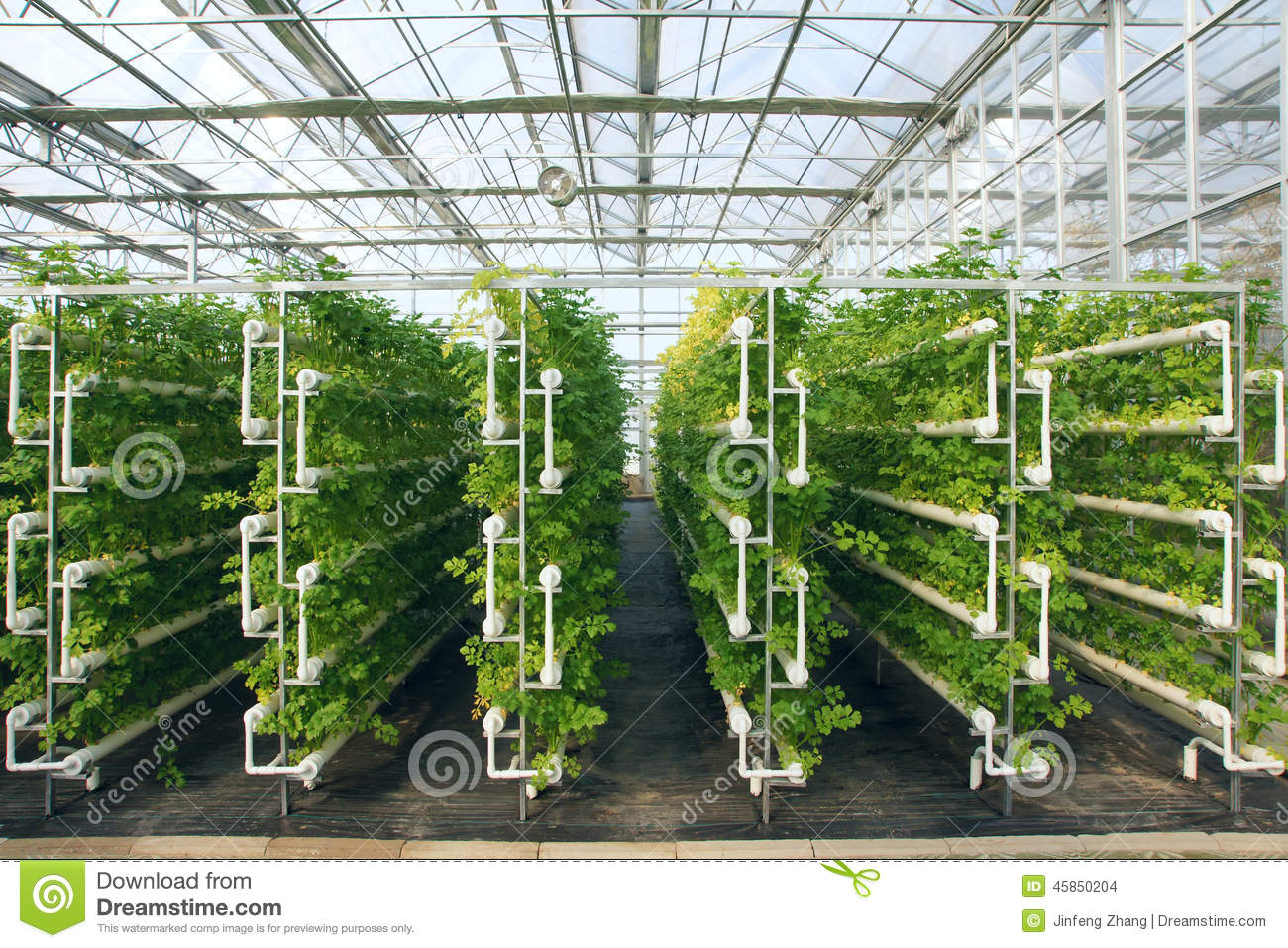 Stock Photo Greenhouse Hydroponic Celeries Growing Hothouse Image45850204 on Greenhouse Interior Design Ideas