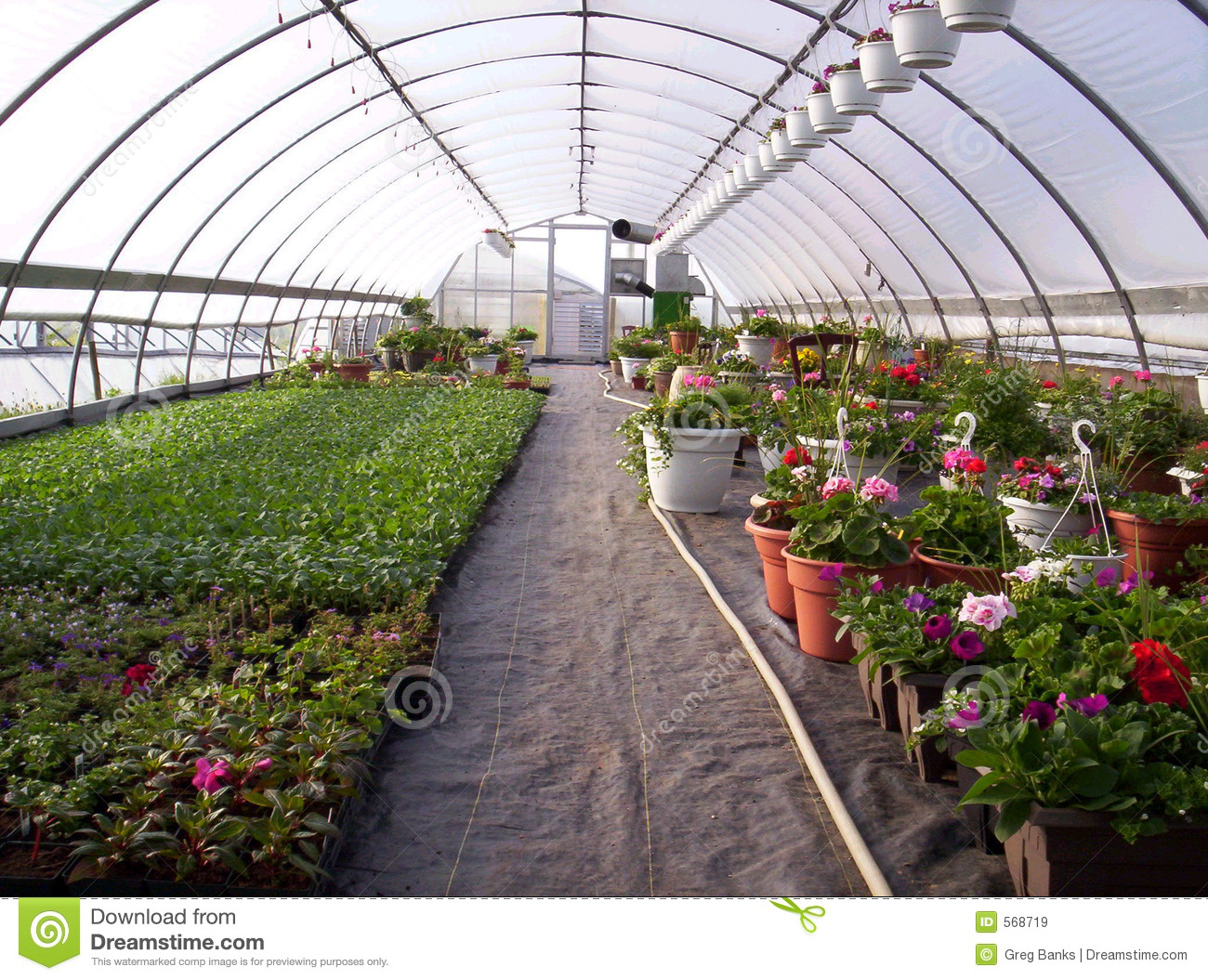 Greenhouse plants stock image image of ornamental for Plant nursery