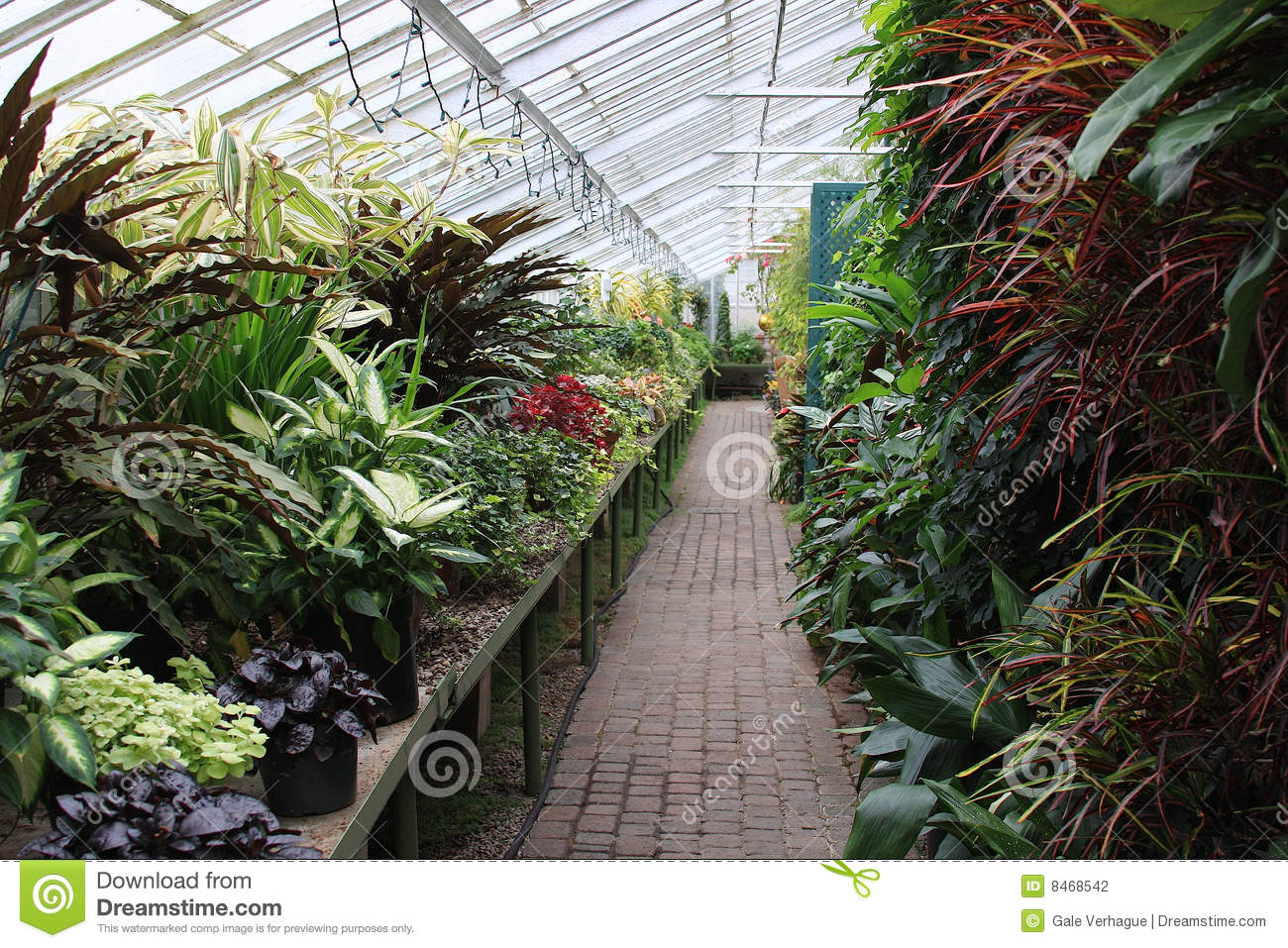 Greenhouse Plants Stock Photo Image Of Botany Agriculture 8468542