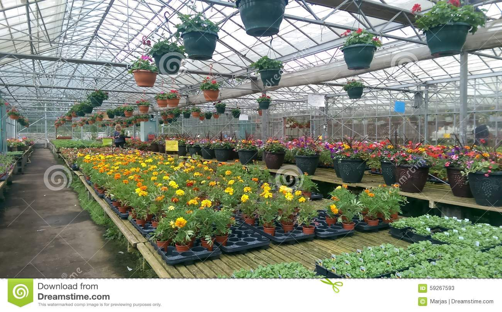 Outdoor Flowers For Sale Part - 17: Flowers Full Garden Greenhouse Plants Sale ...
