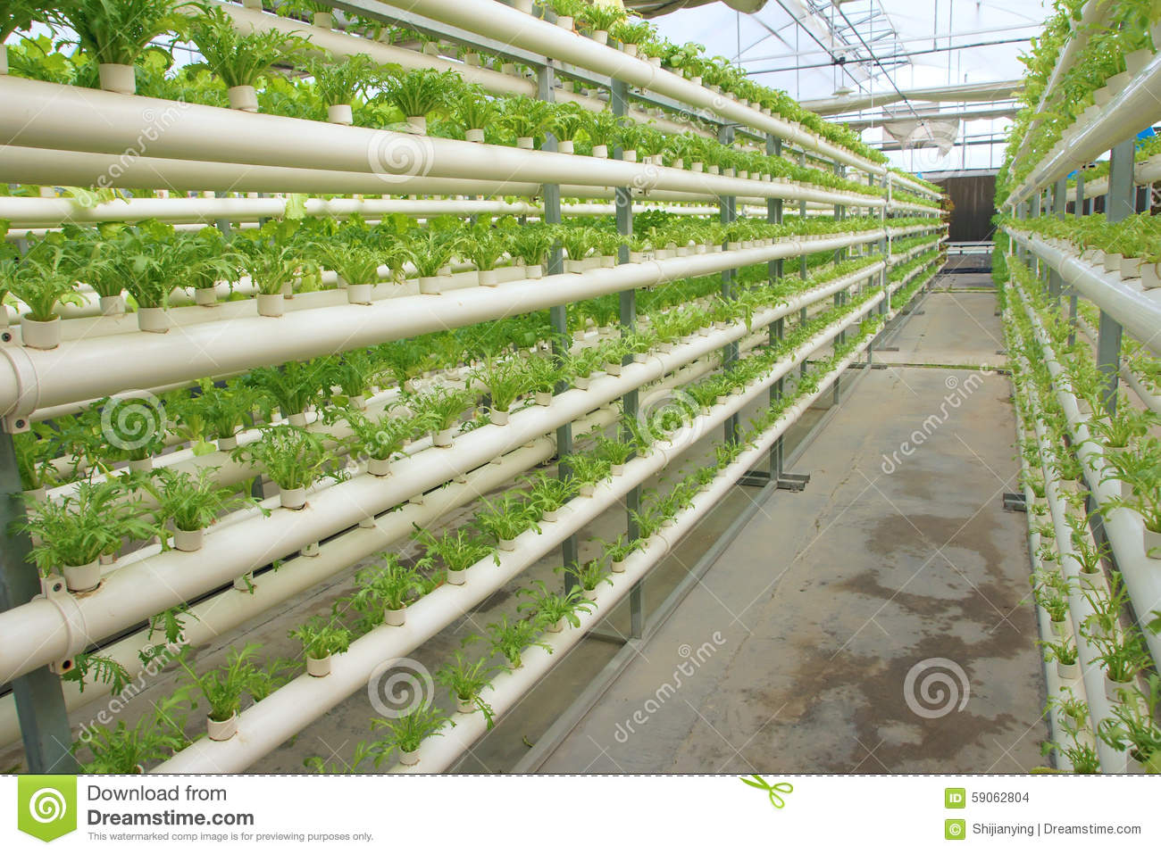 Royalty Free Stock Photo. Download Greenhouse Vegetable ...