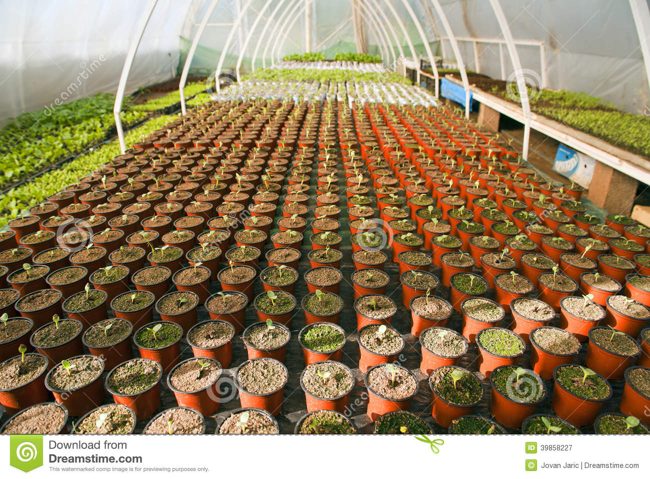 Royalty Free Stock Photo. Download Greenhouse For Vegetables ...