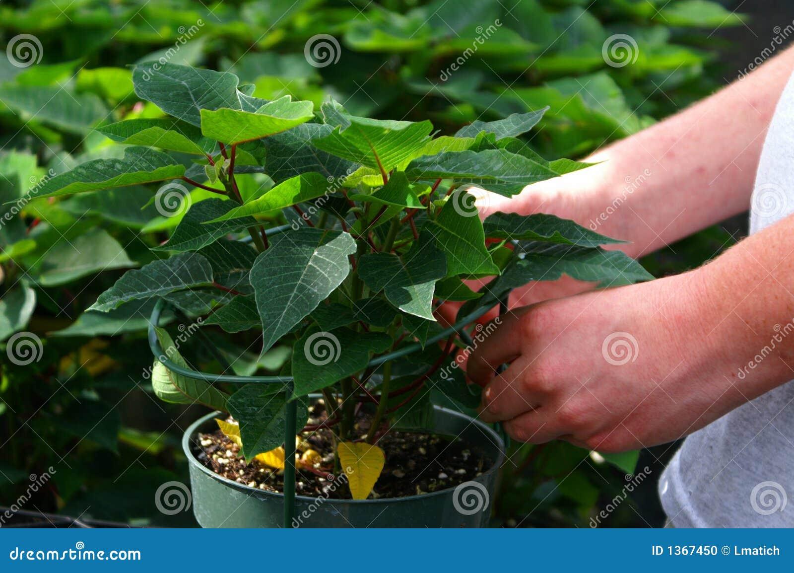 Greenhouse Worker 1