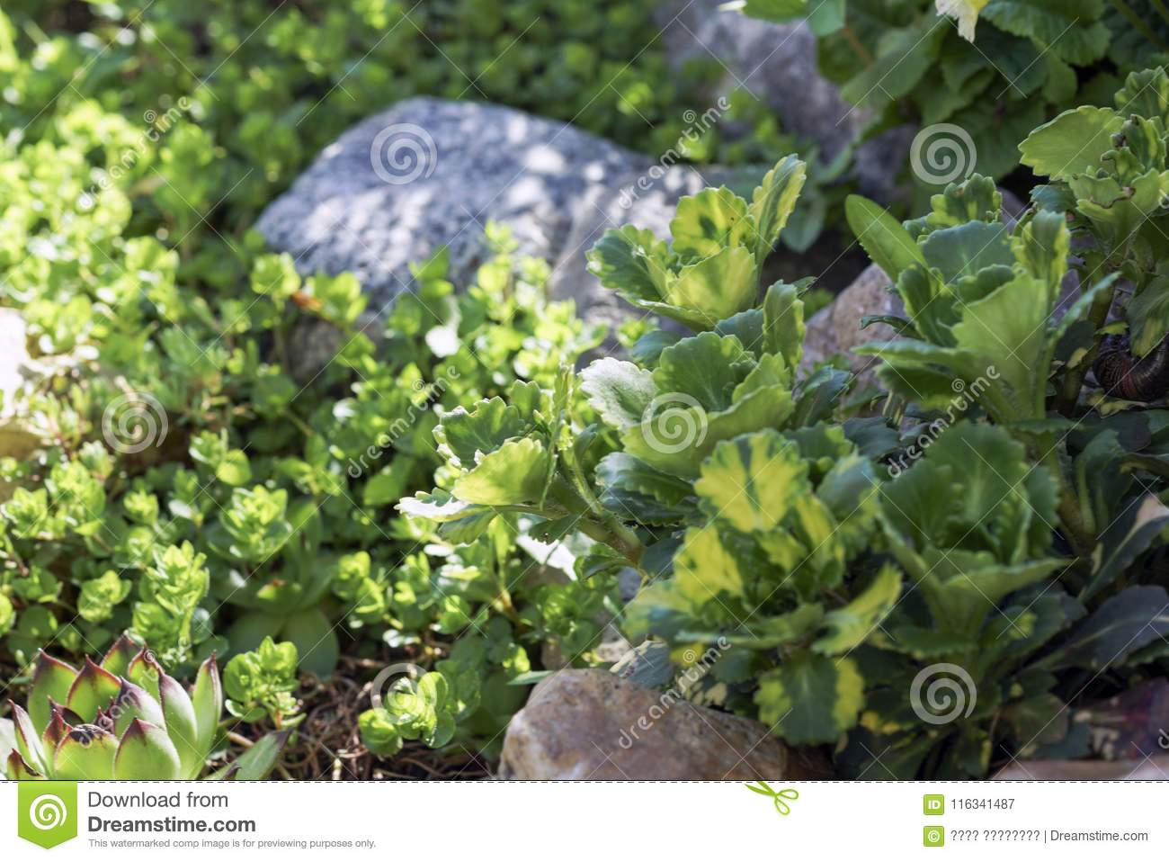 Greens on the Sunny rocks stock image  Image of green