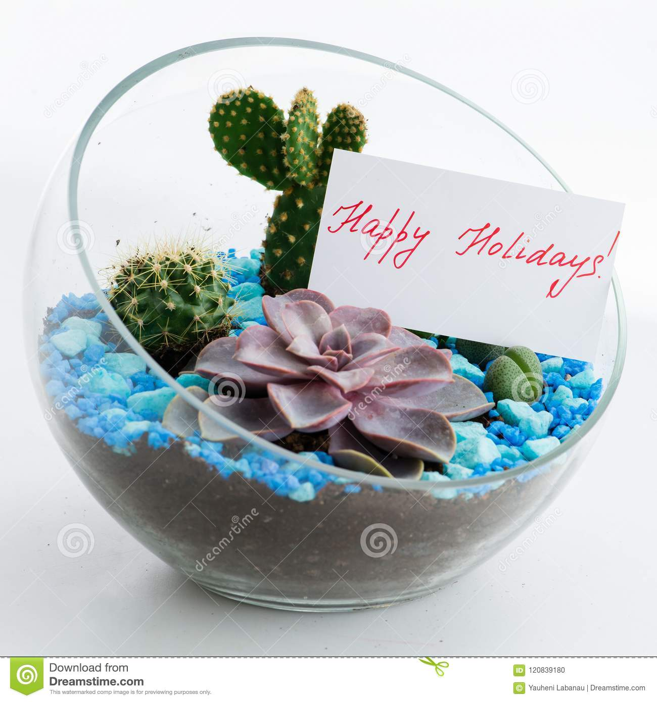 Greeting card in florarium happy holidays stock photo image of greeting card in florarium happy holidays m4hsunfo