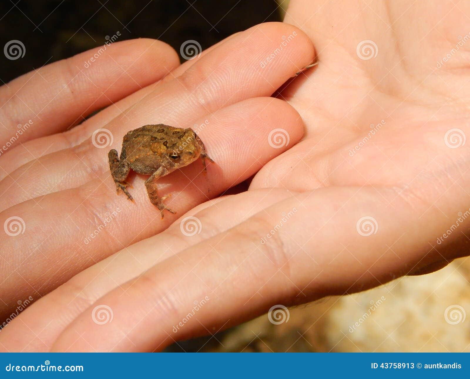 Grenouille minuscule