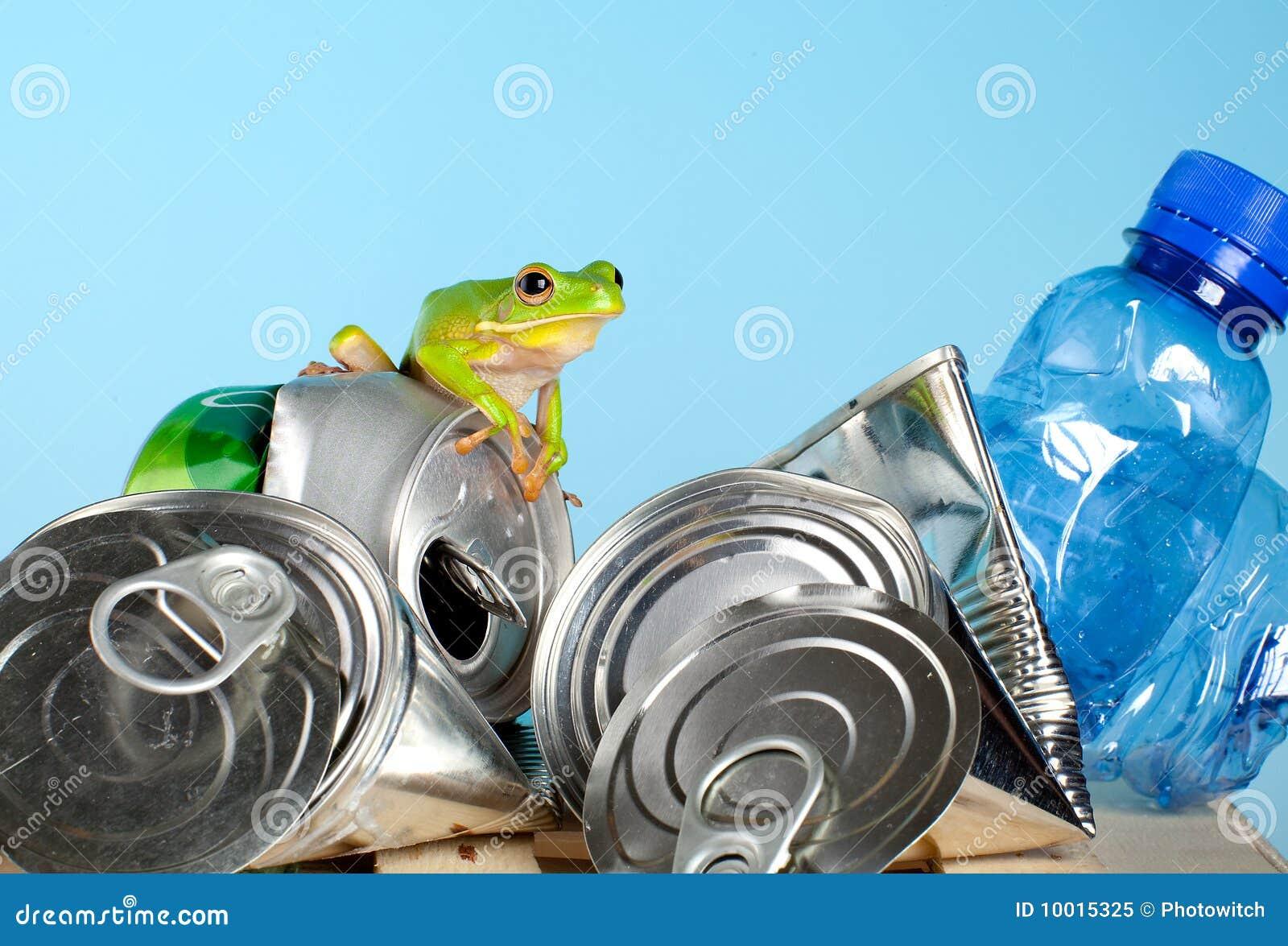 Grenouille sur des ordures