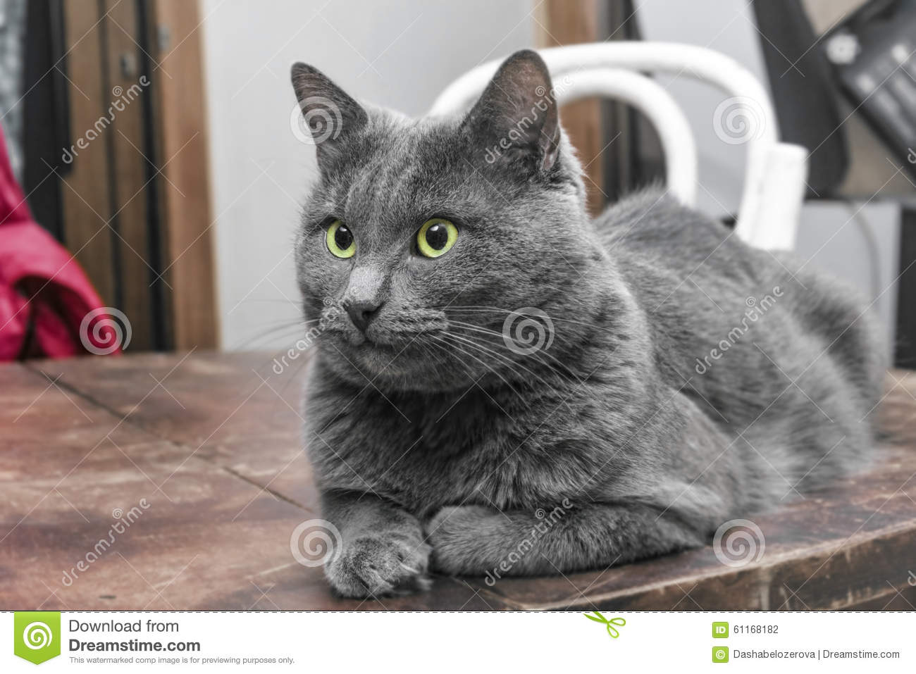 Grey Cat With Green Eyes Table Stock Image