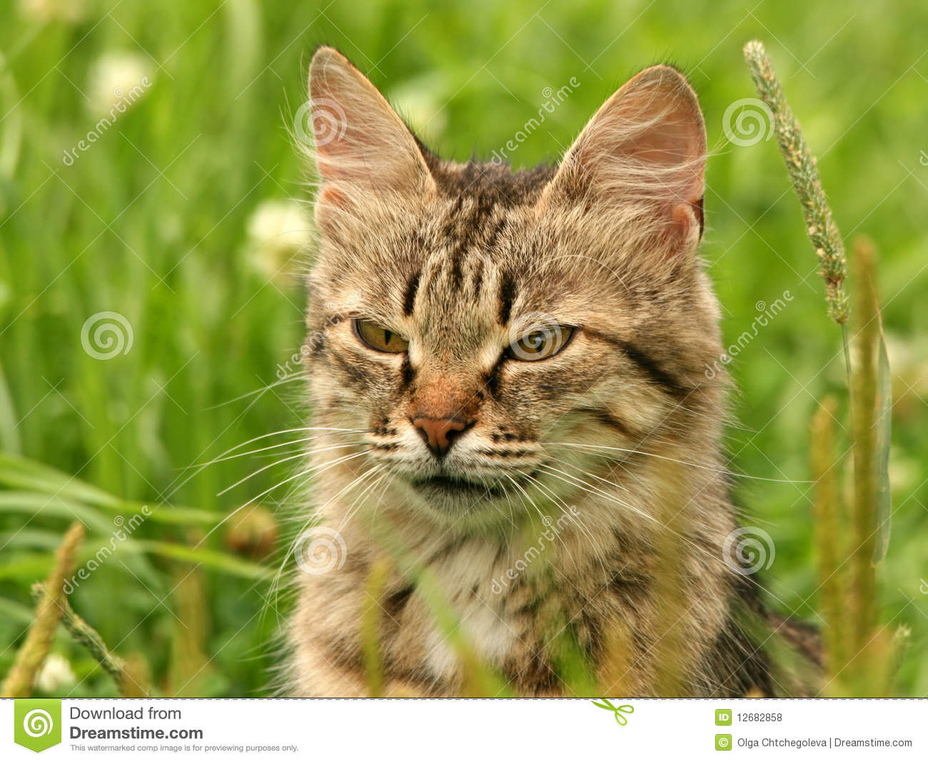 grey-cat-green-grass-12682858.jpg
