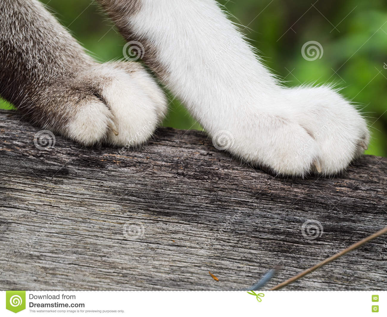Grey Cat Paws Standing