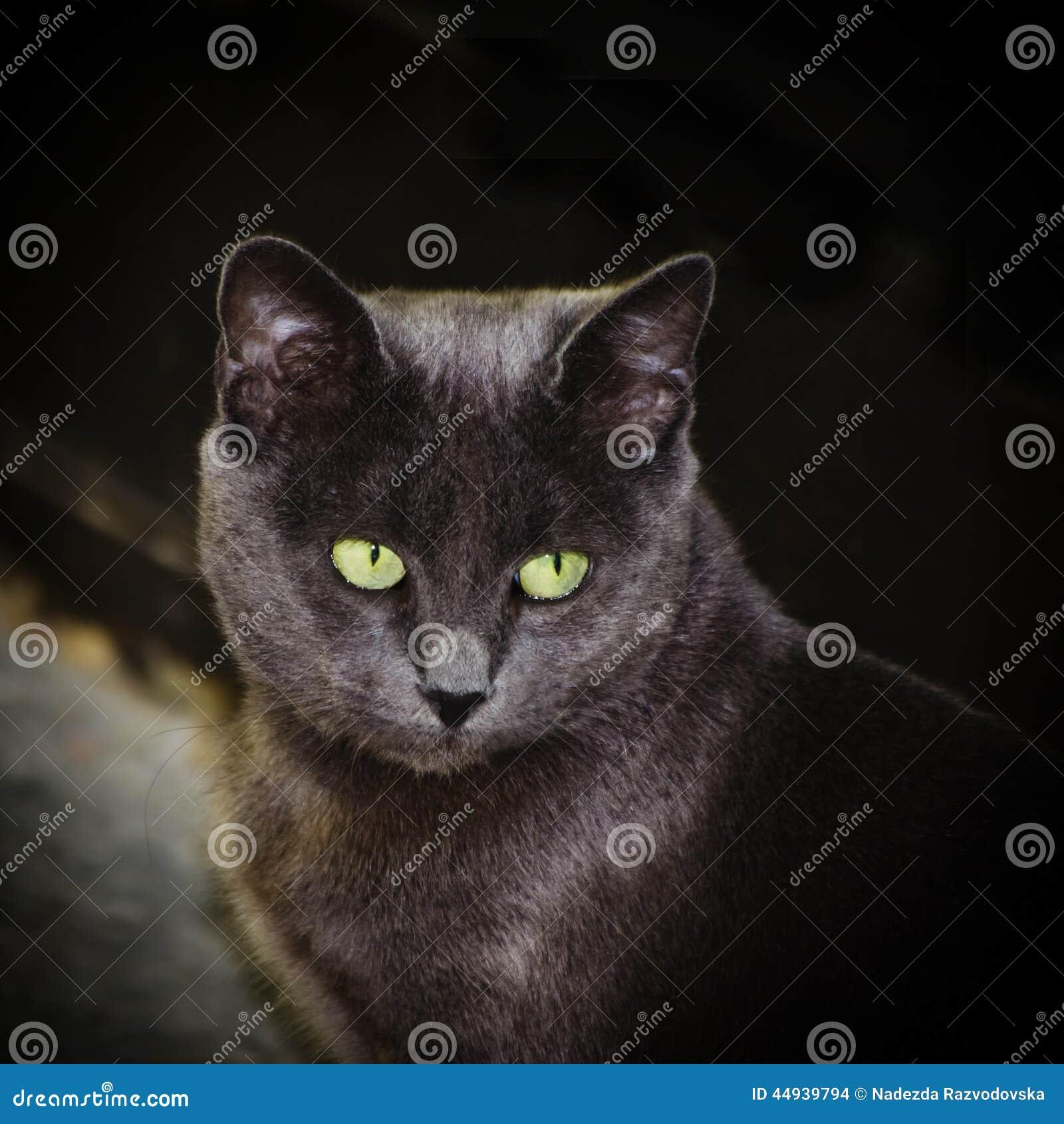 Singel kvinne cat