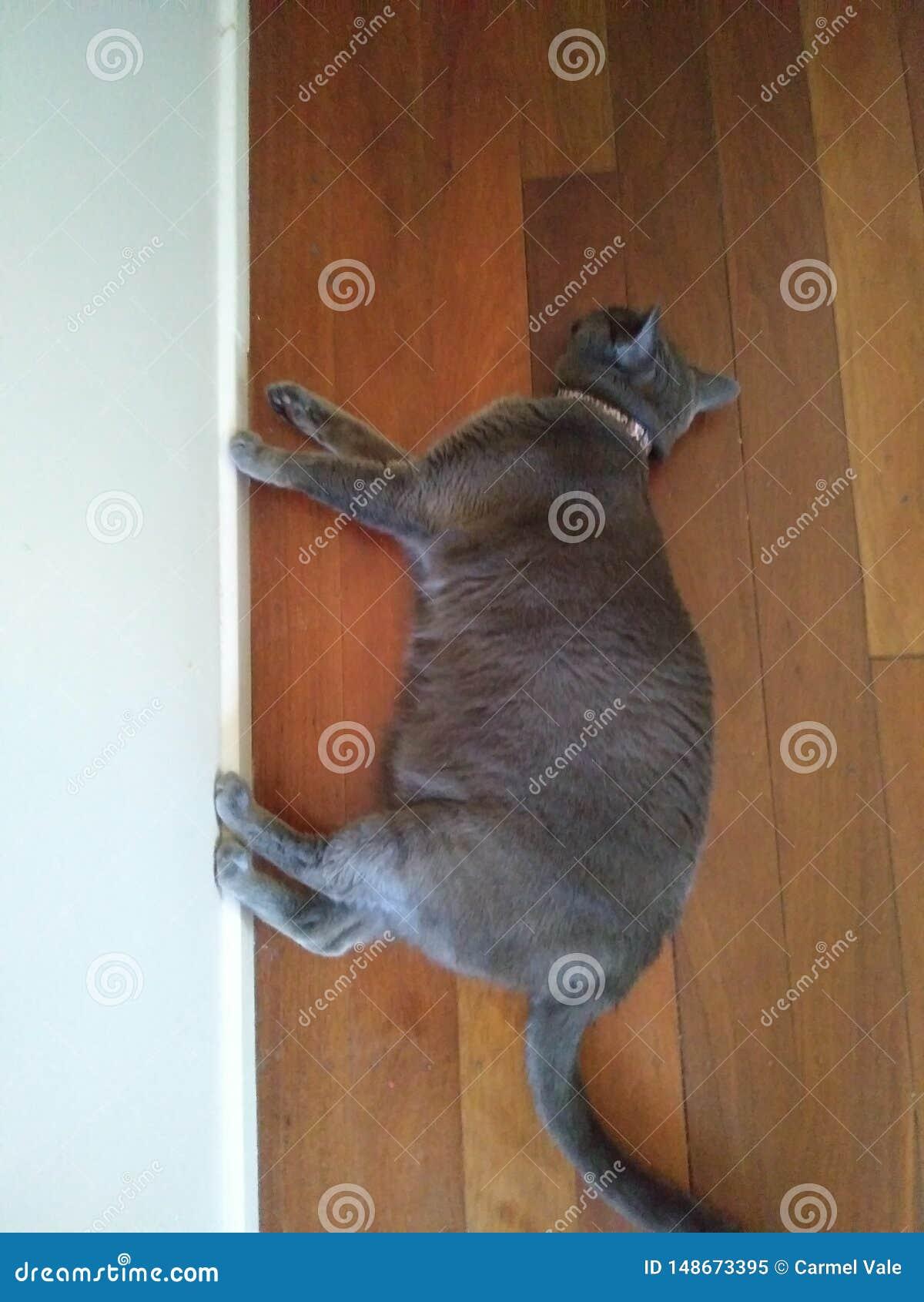 Grey cat walking on wall