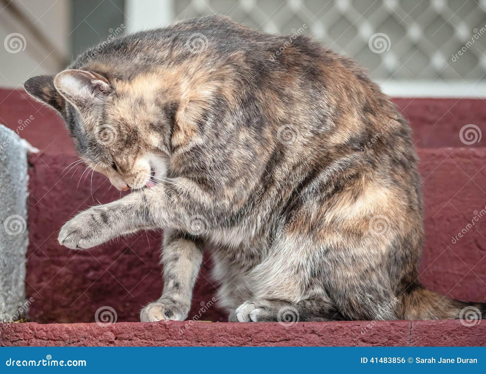 not funny cat