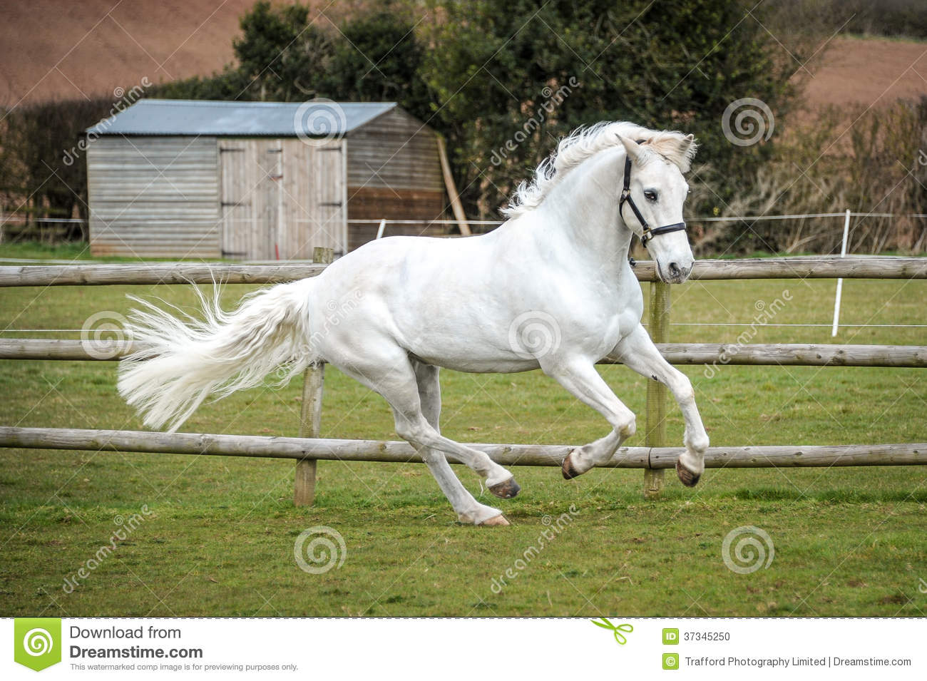 Horse Cantering In A Field Grey horse cantering in field stock photo ...