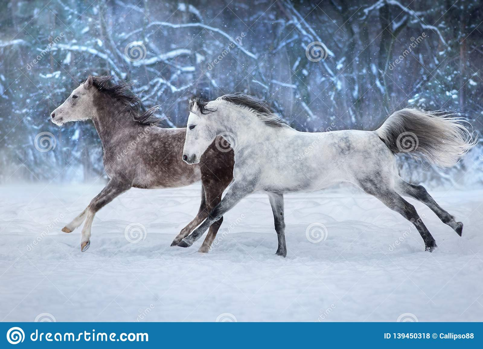 10 857 Horses Snow Photos Free Royalty Free Stock Photos From Dreamstime