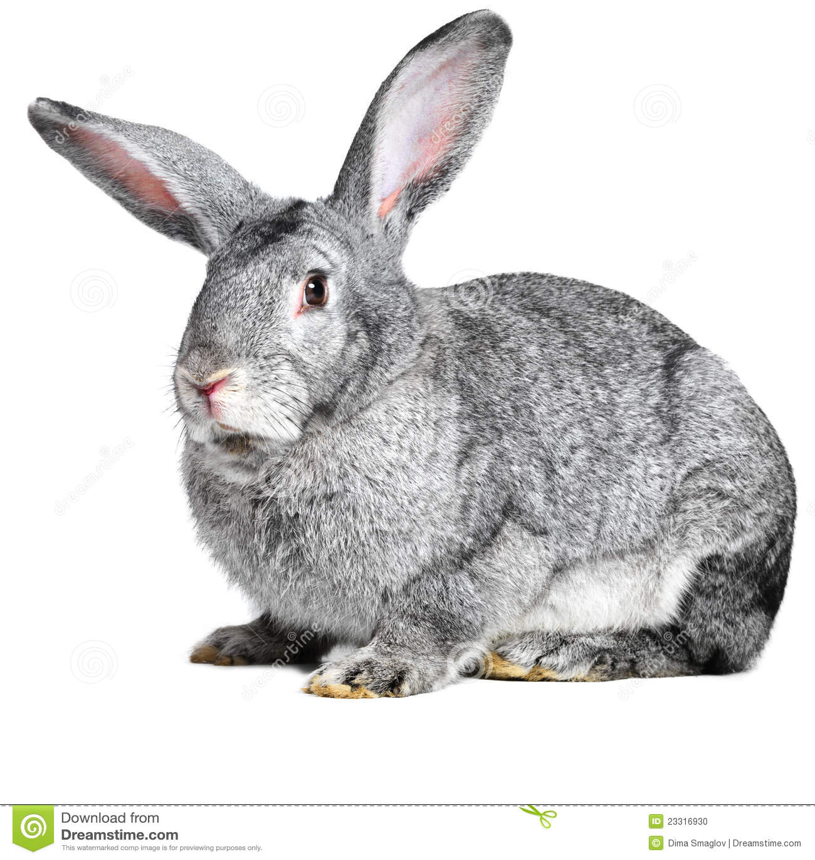 Grey House Rabbit Stock Photo - Image: 23316930