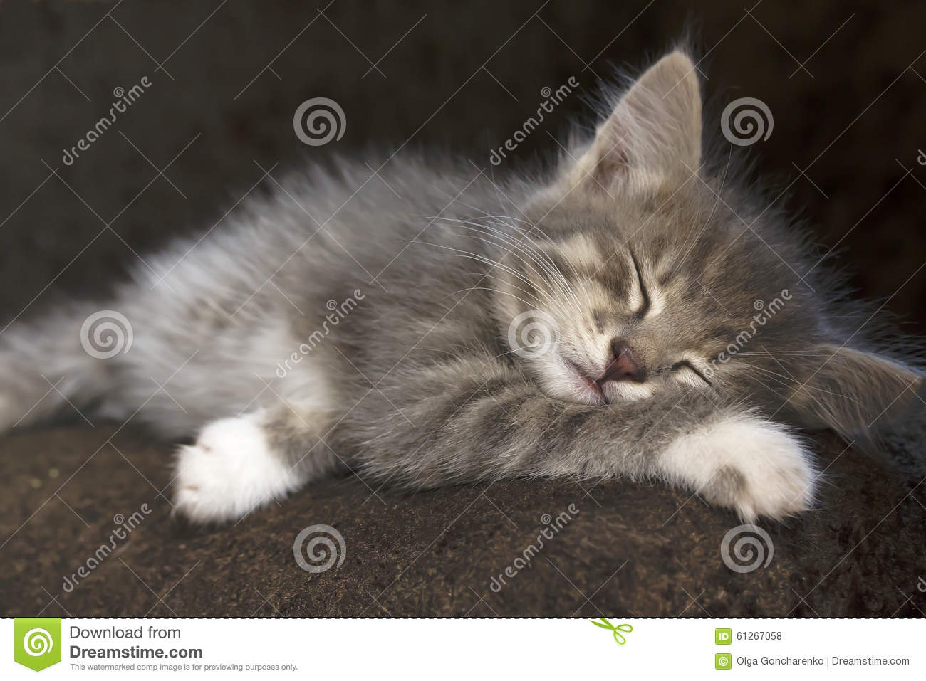 kitten biting nose