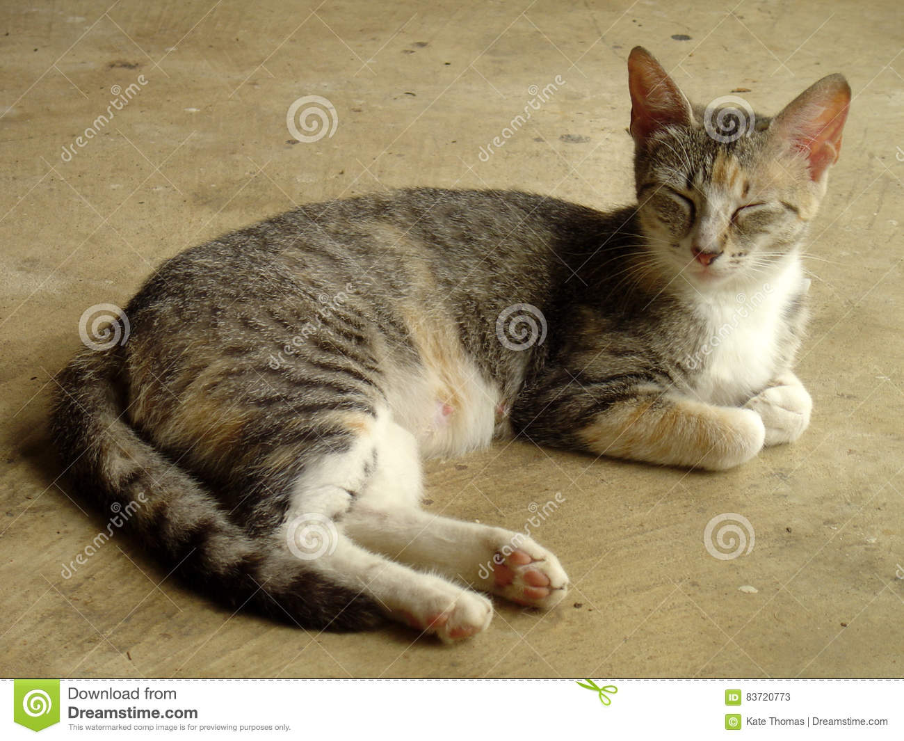 Grey Mama Tabby Cat Resting In Mississippi Stock Photo