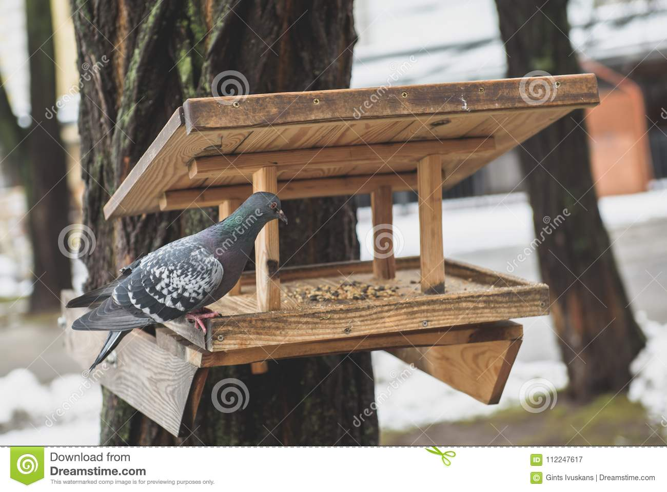 Grey Pigeon At Wooden Bird Feeding House Stock Image Image Of