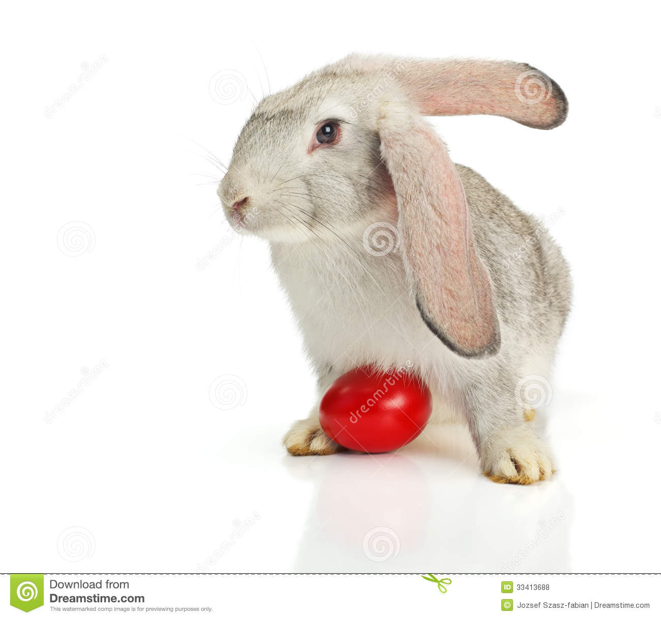 Grey rabbit with red easter egg