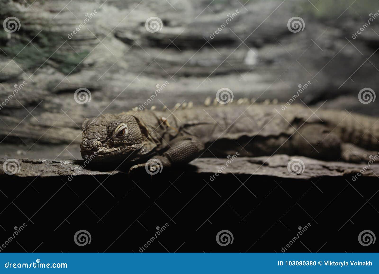 Grey Small Lizard Gecko Close Up Stock Photo Image Of Green