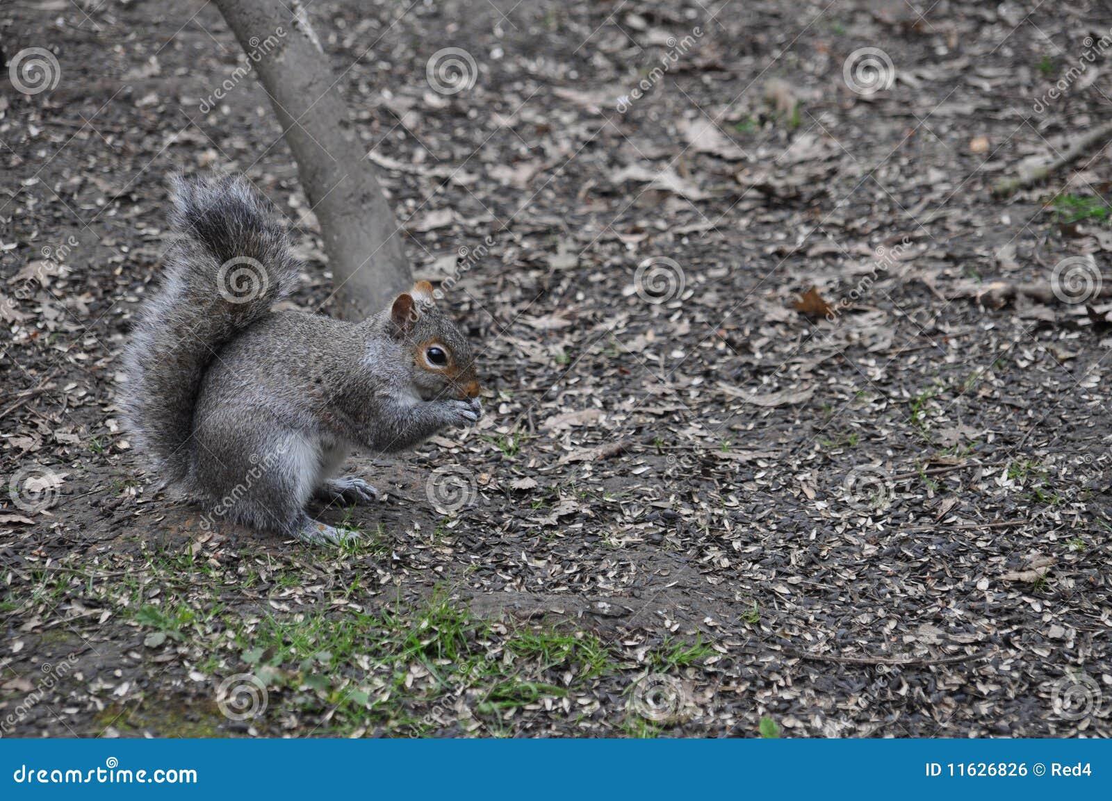 Baby Ground Squirrel Food