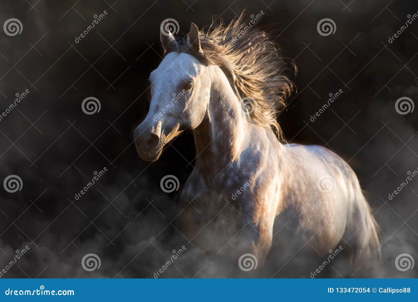 Grey Arabian Horse On Black Stock Photo Image Of Nature Head 133472054