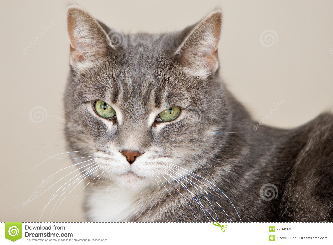 Grey Striped Cat With Green Eyes