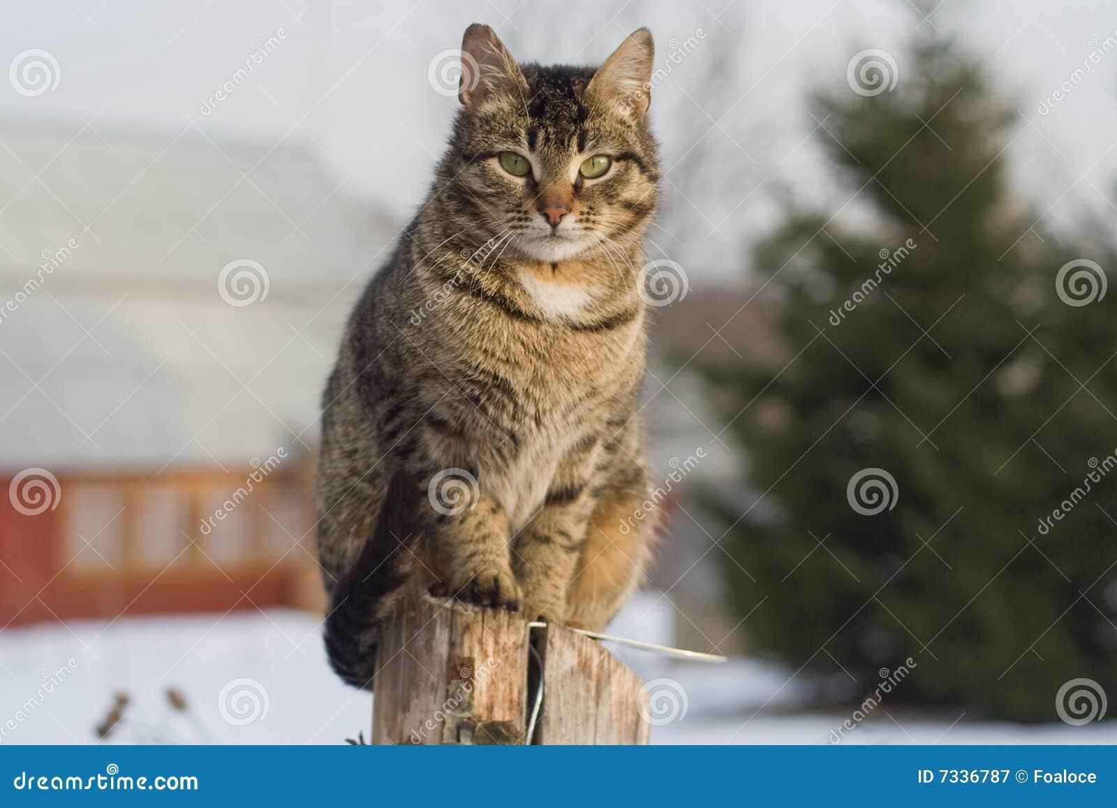 Grey Tabby Cat Sitting On Post Stock Image Image 7336787