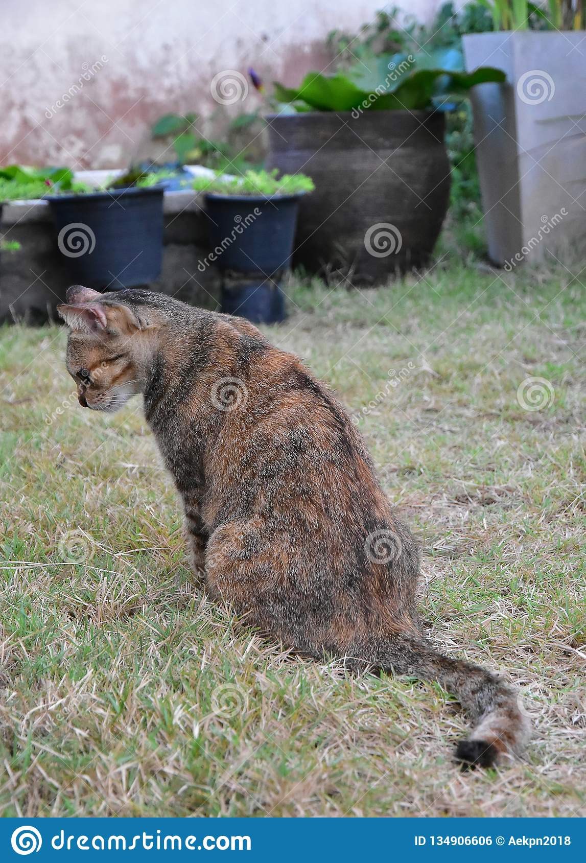 Grey Tabby Friendly Cat interesting some foods on the grass field