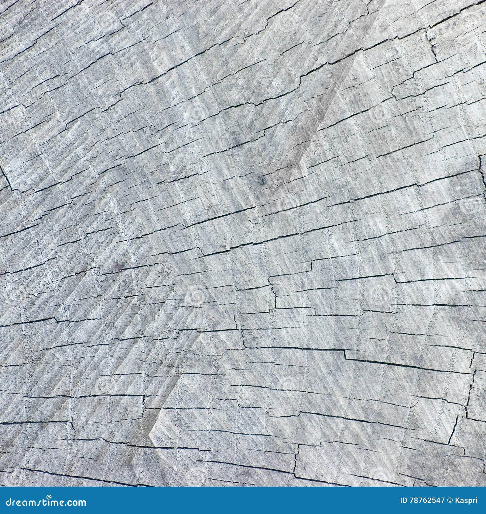 Grey Tree Stump Cut Texture rachado resistido natural, detalhado close up Textured grande fundo do teste padrão