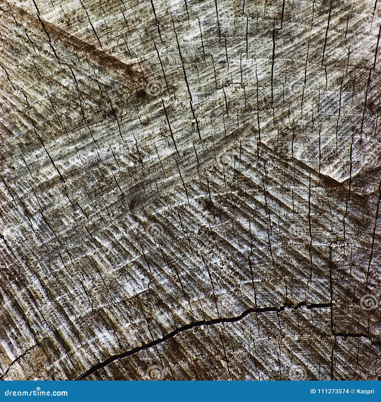 Grey Tree Stump Cut Texture resistido natural, grande close up envelhecido velho detalhado de Gray Lumber Background Horizontal M