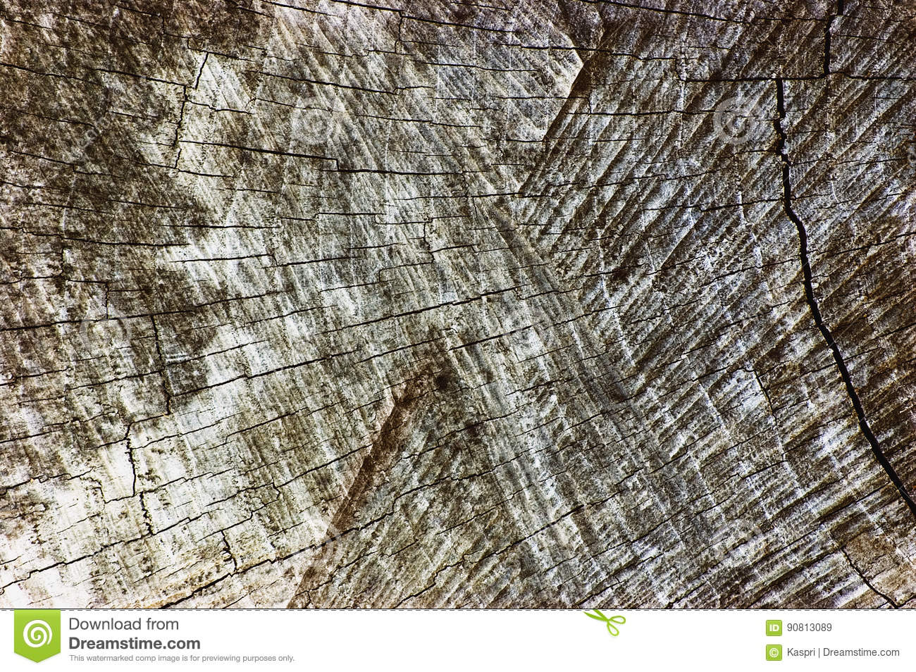 Grey Tree Stump Cut Texture resistido natural, grande close up envelhecido velho detalhado de Gray Lumber Background Horizontal M