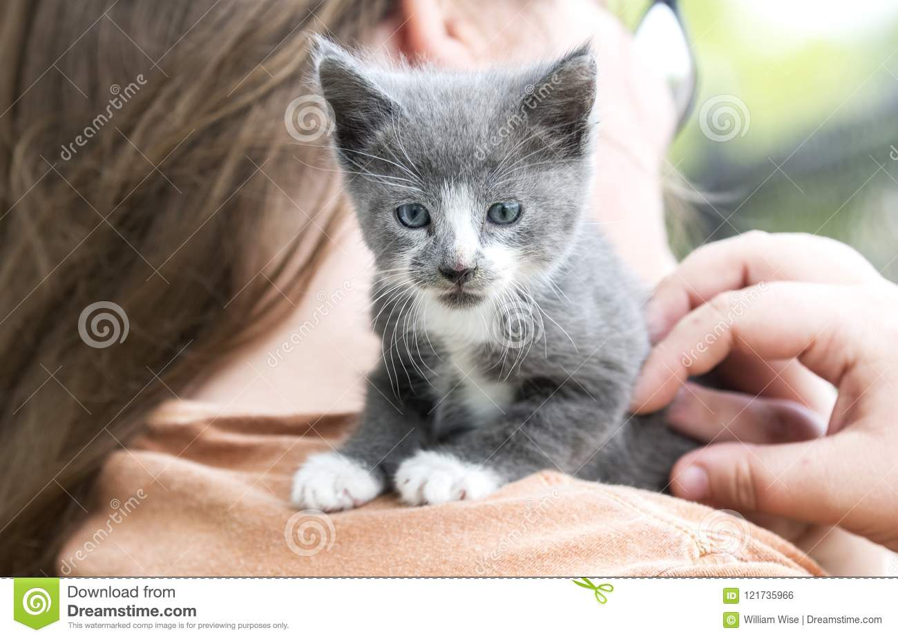Grey And White Kitten On Girl S Shoulder Pet Adoption Photo Stock Photo Image Of Girls White 121735966
