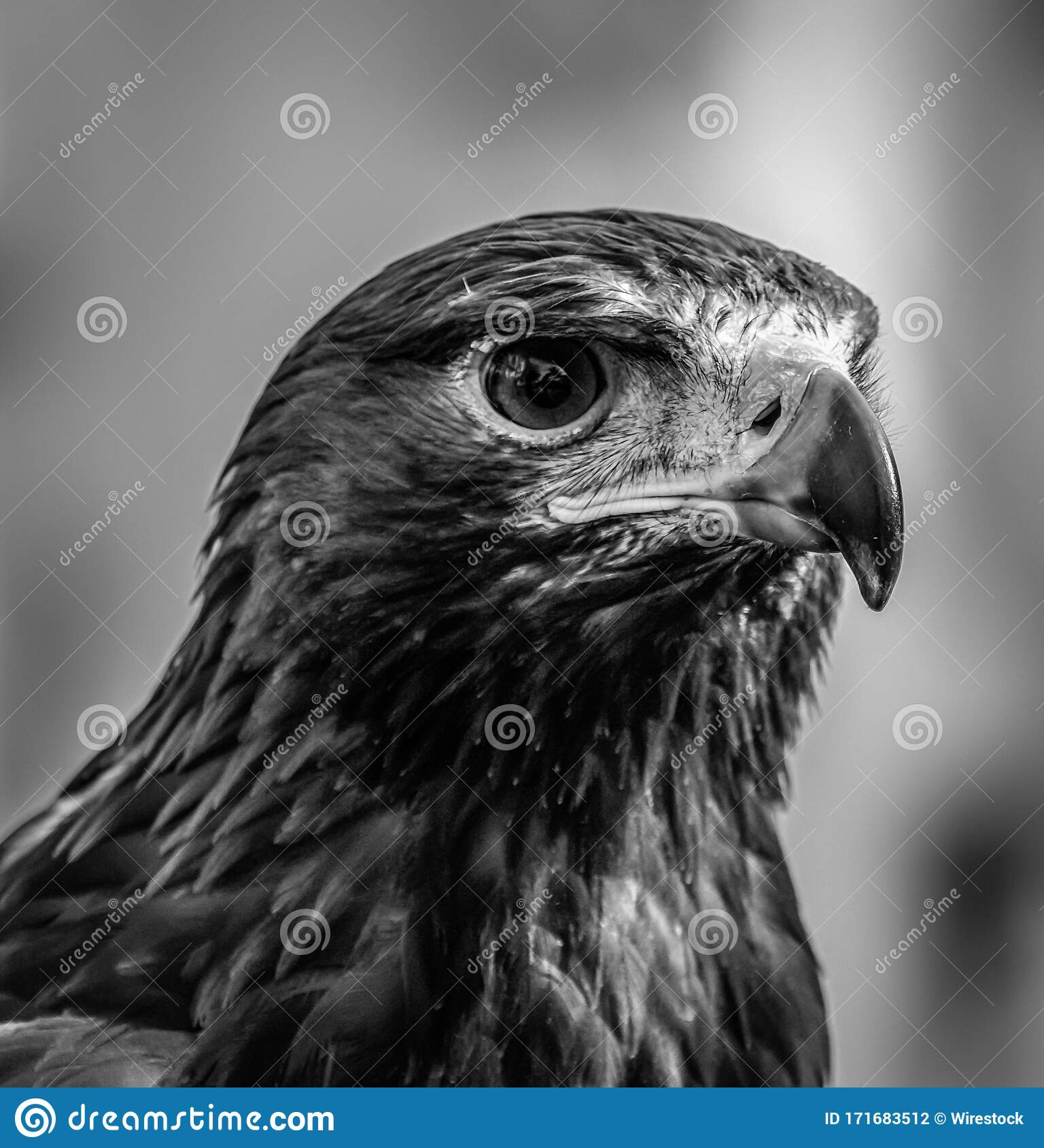 597 Greyscale Face Photos Free Royalty Free Stock Photos From Dreamstime