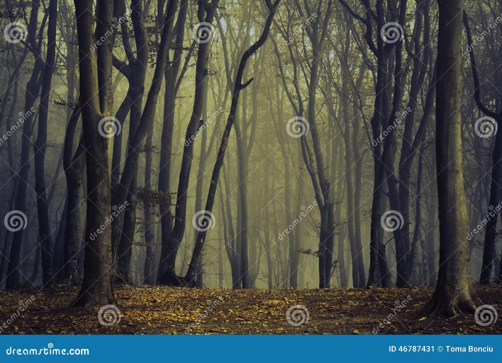 Griezelige bomen in de mist van het bos