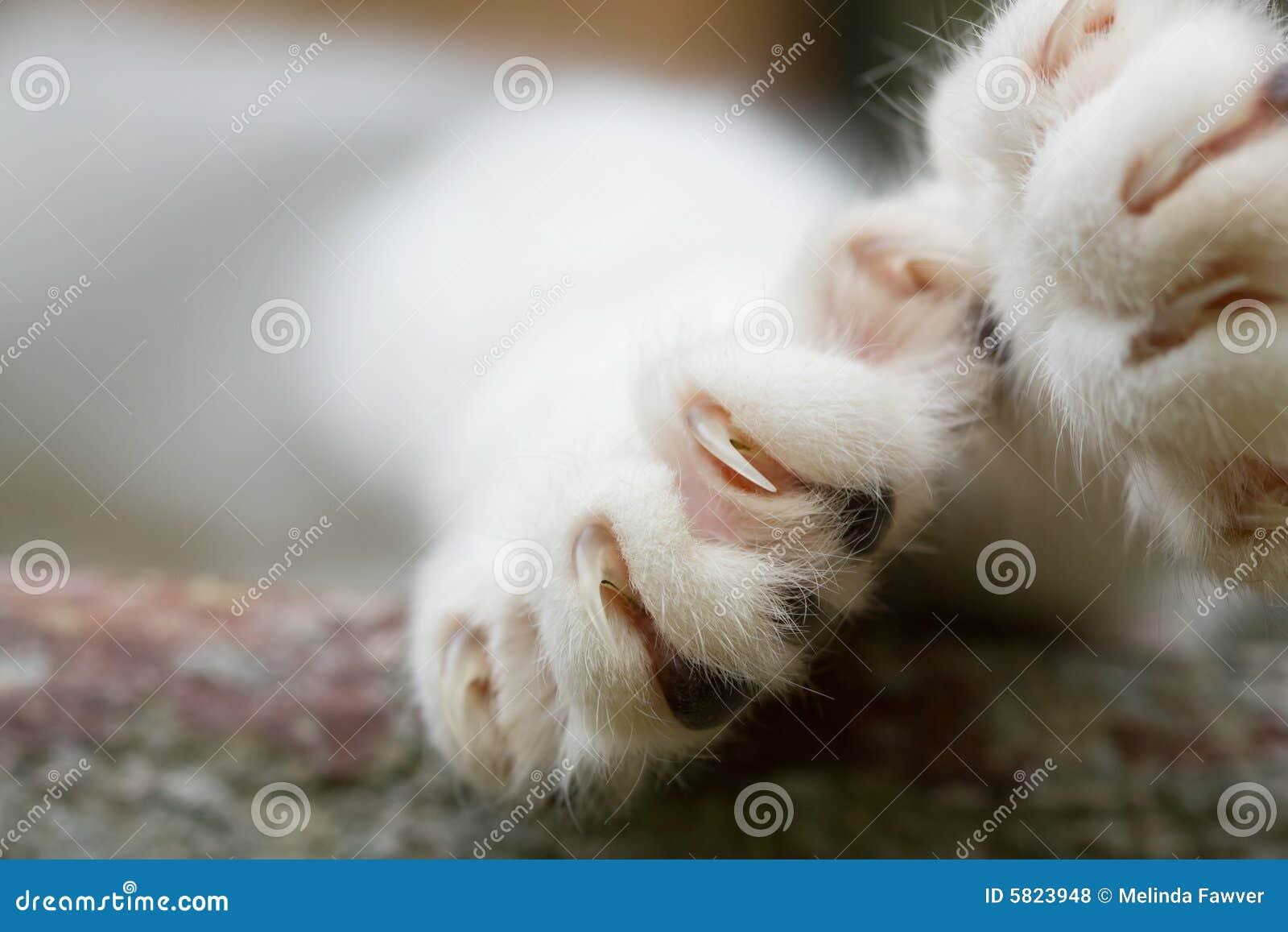 Griffes de chat photo stock image du serres animal chat for Exterieur kat