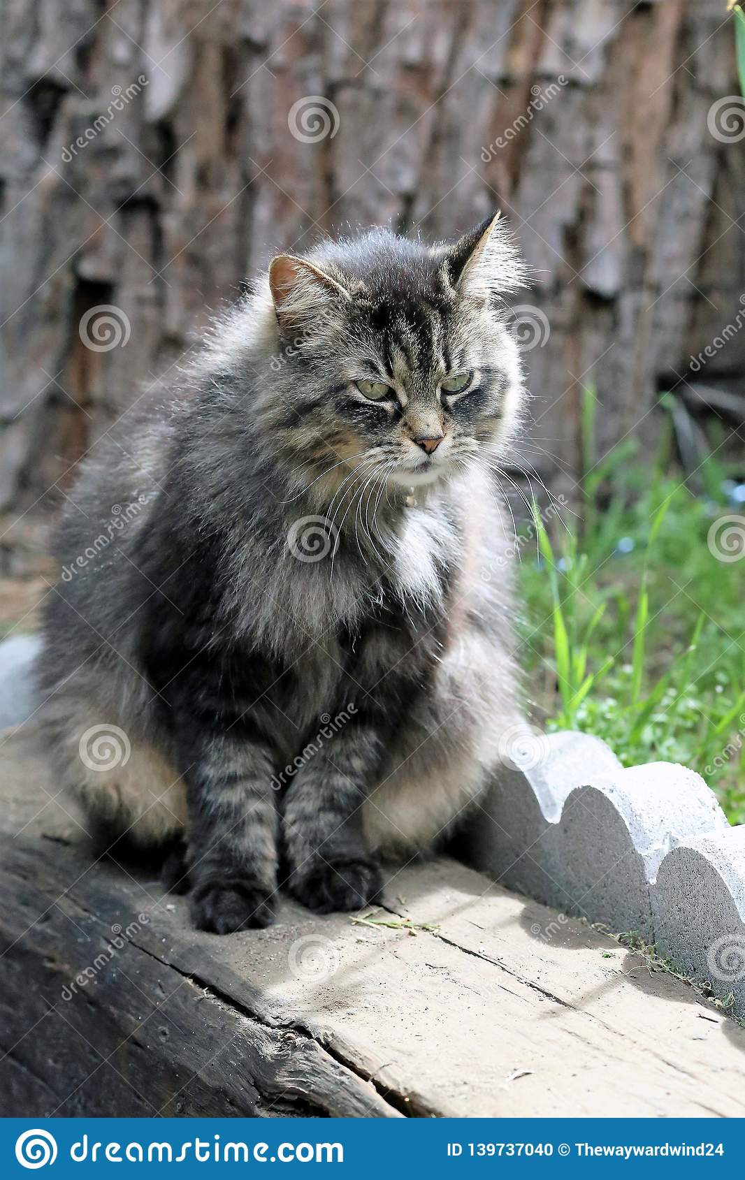 Grijs, Fuffy Tabby Cat