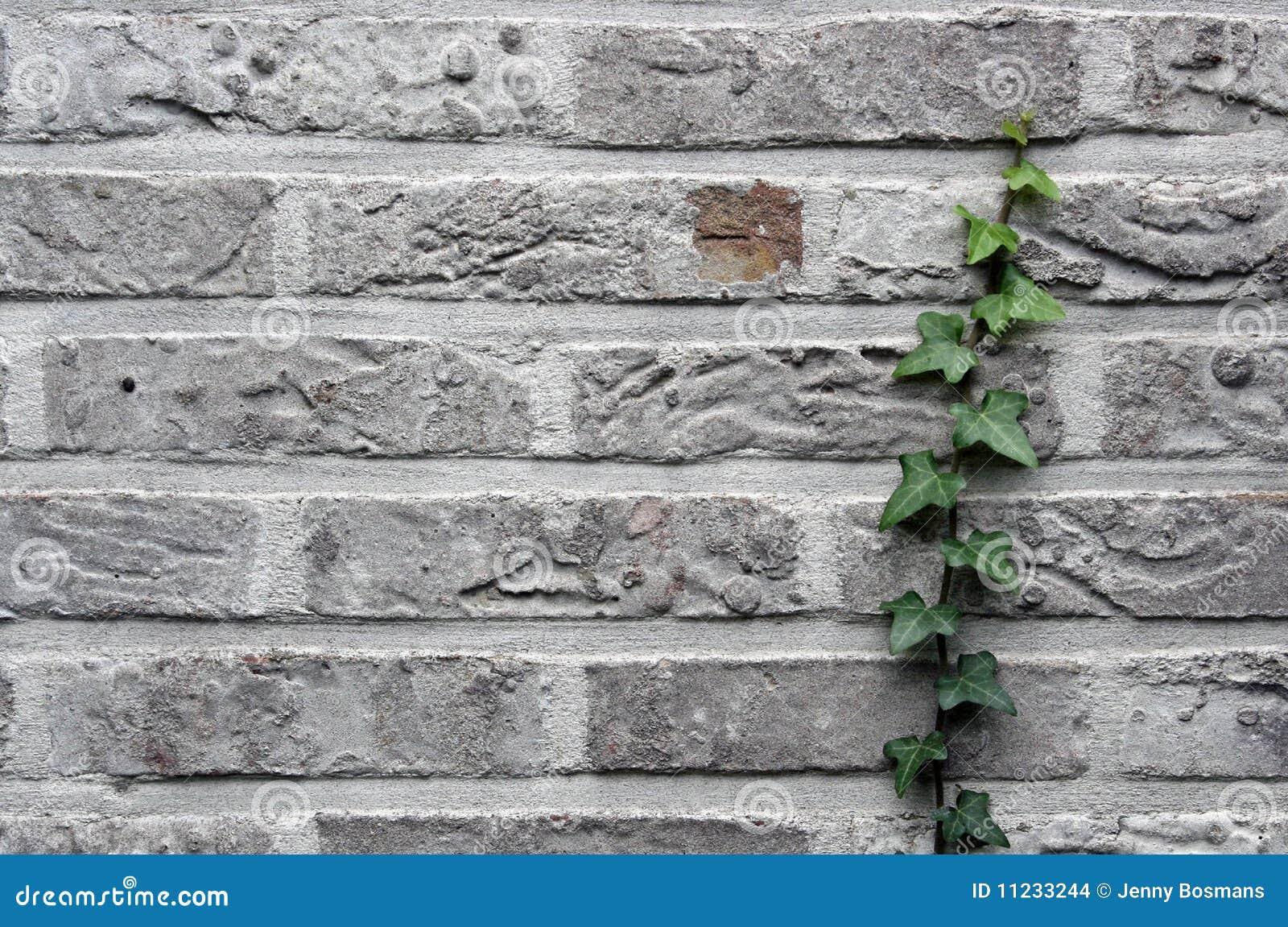 Grijze bakstenen muur met klimop stock foto afbeelding 11233244 for Grijze muur