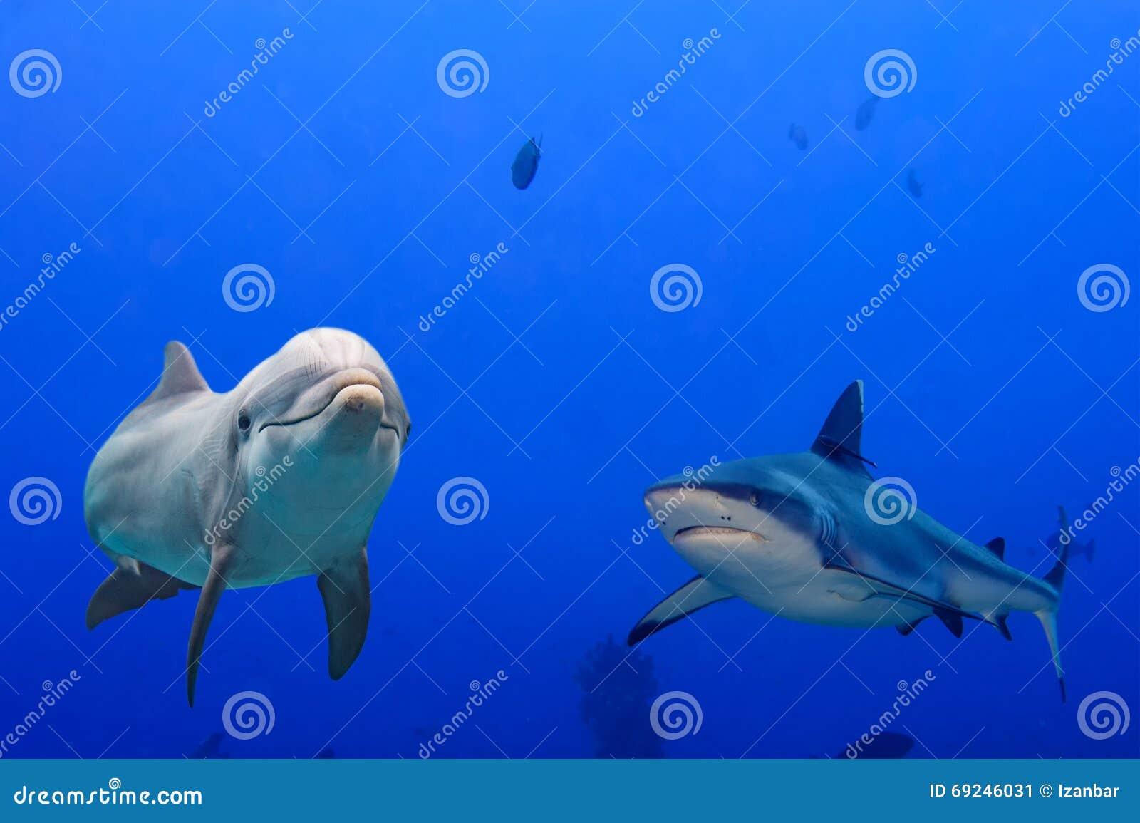 grijze haai en dolfijn onderwater stock afbeelding