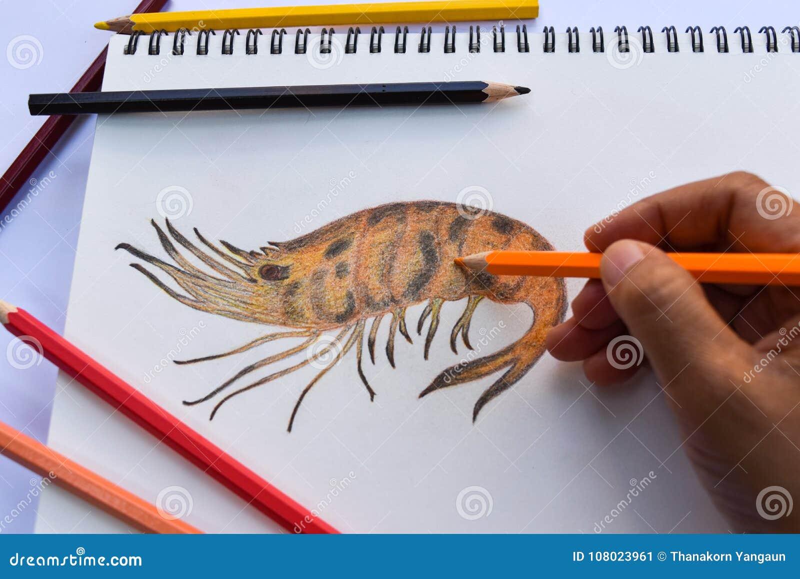 Grillad räkateckning på teckningsboken och de kulöra blyertspennorna