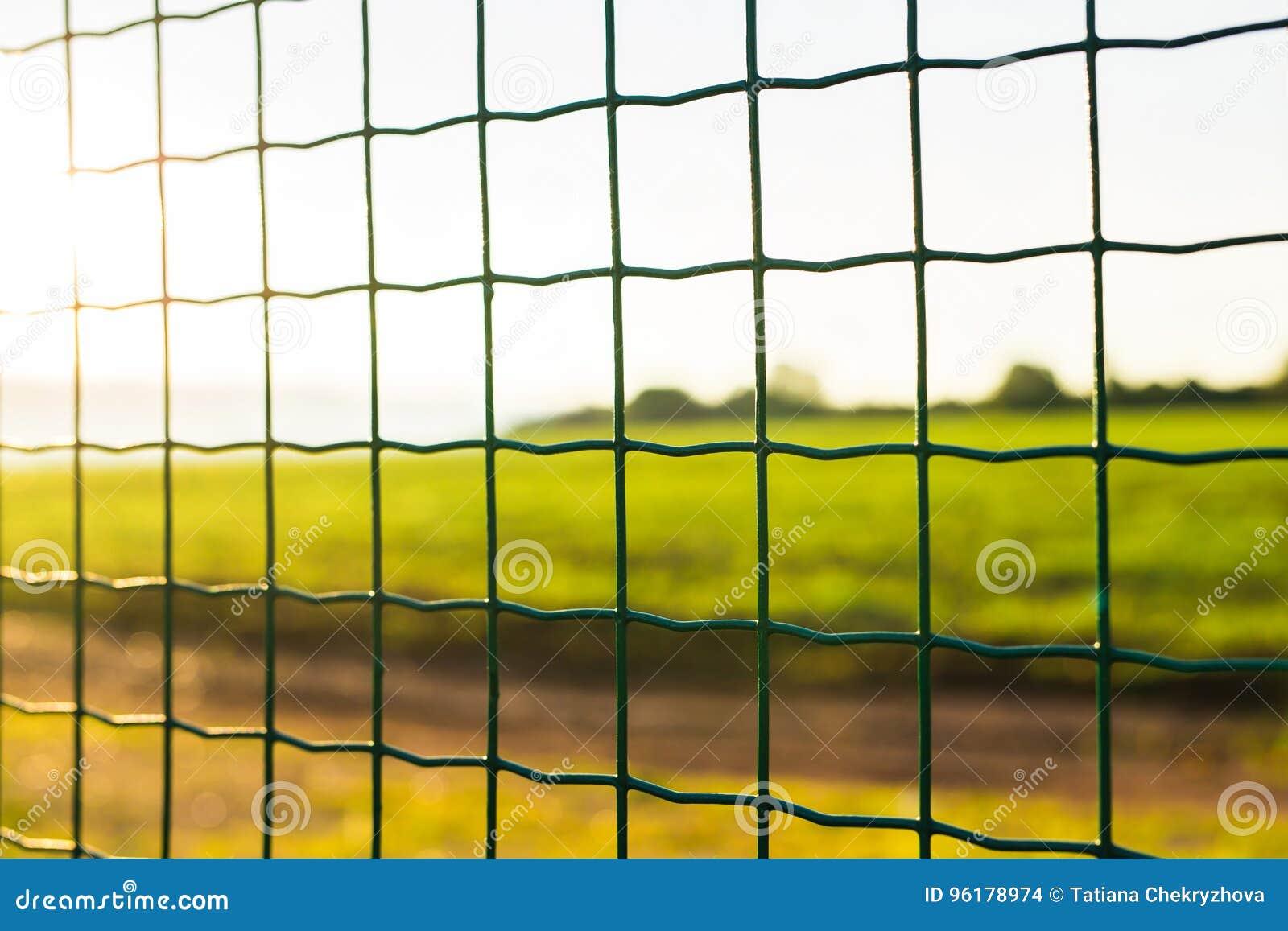 Grillage Avec L\'herbe Verte Sur Le Fond Photo stock - Image ...