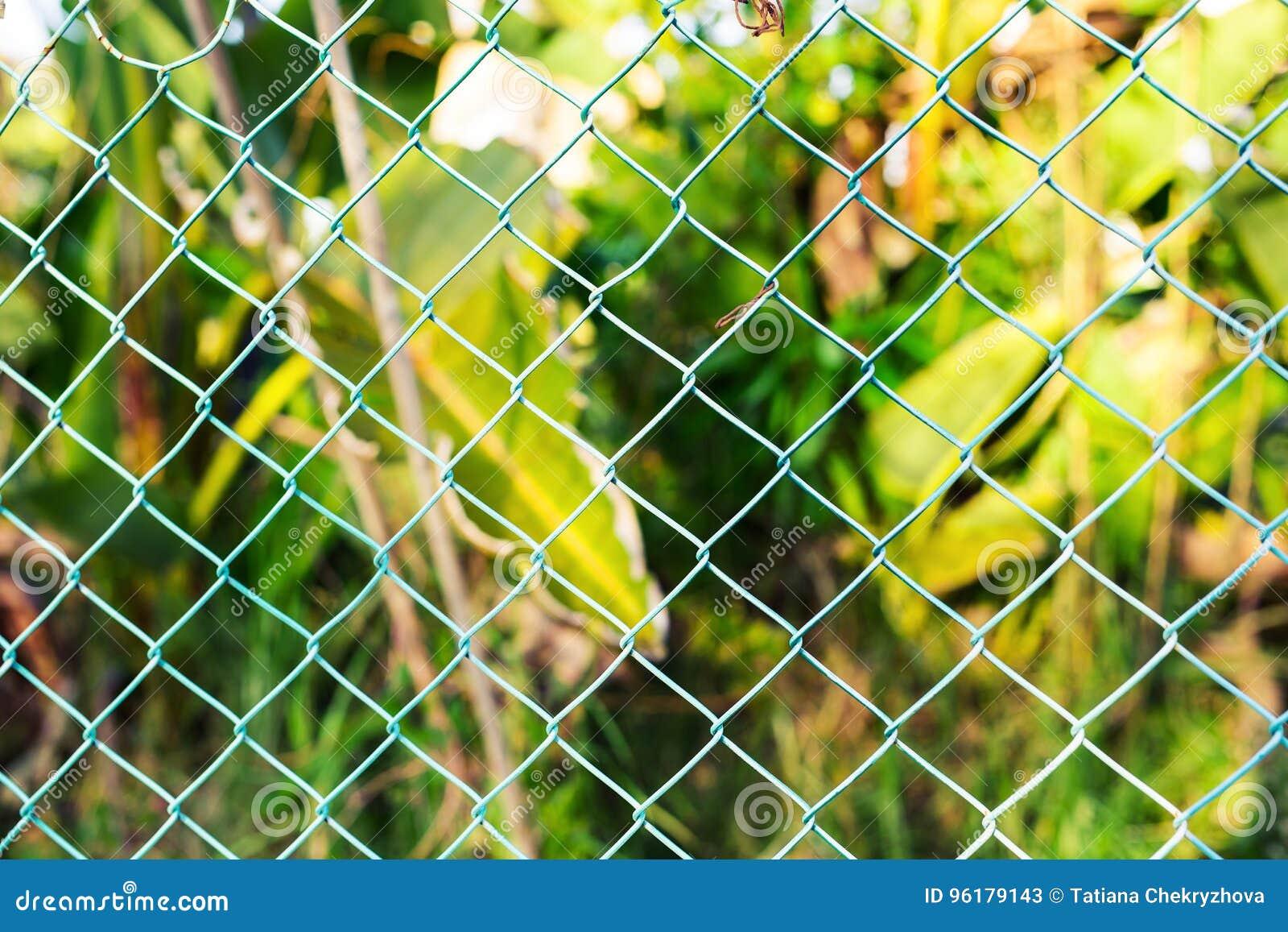Grillage Avec L\'herbe Verte Sur Le Fond Image stock - Image du ...