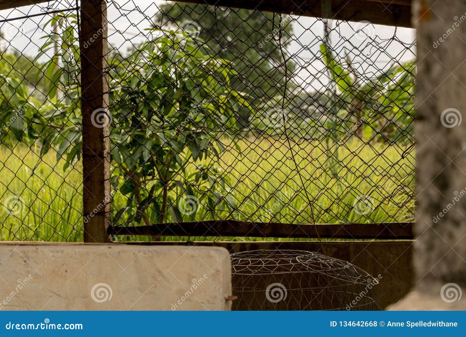 Grillage - Cage De Poulet Abandonnée - Jardin Vert De ...
